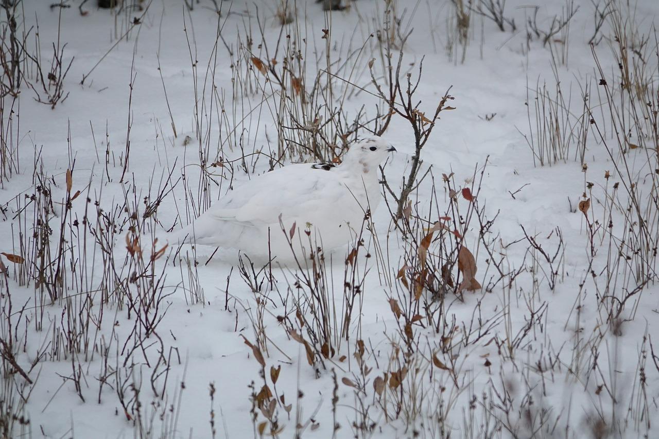 Lagmut talvi.jpg